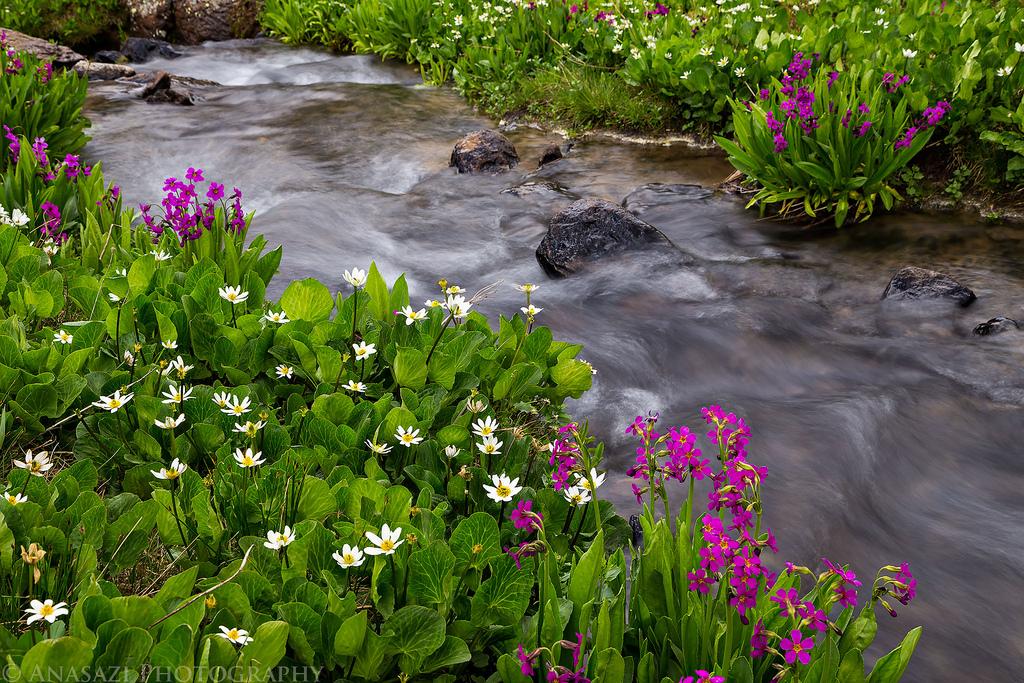 Silverton Wildflowers