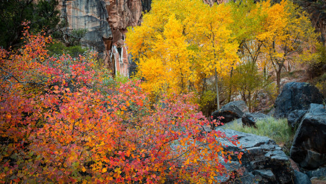Colorado National Monument Fall Colors