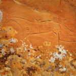 Lichen Horse